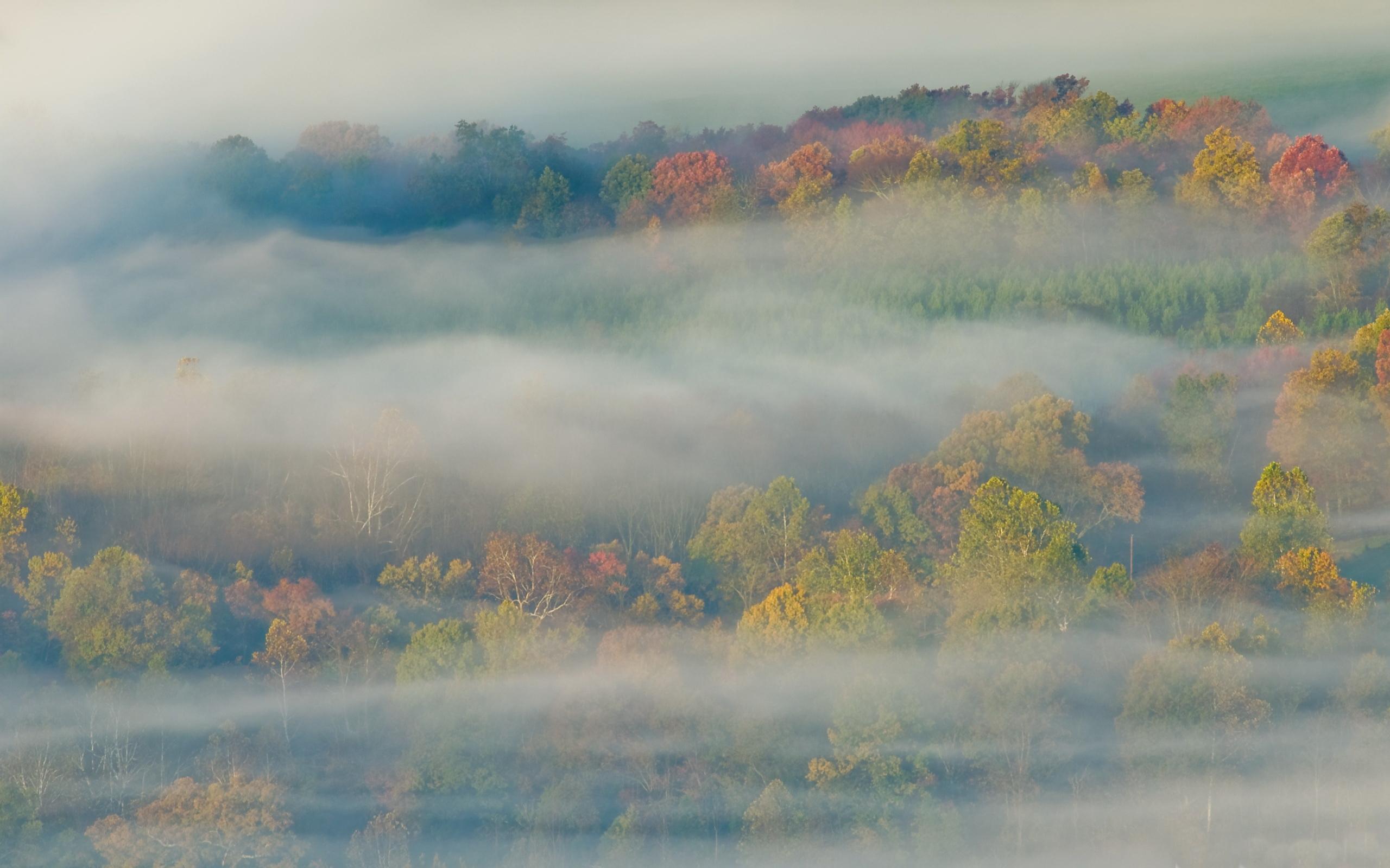 autumn_mist-wallpaper-2560x1600.jpg