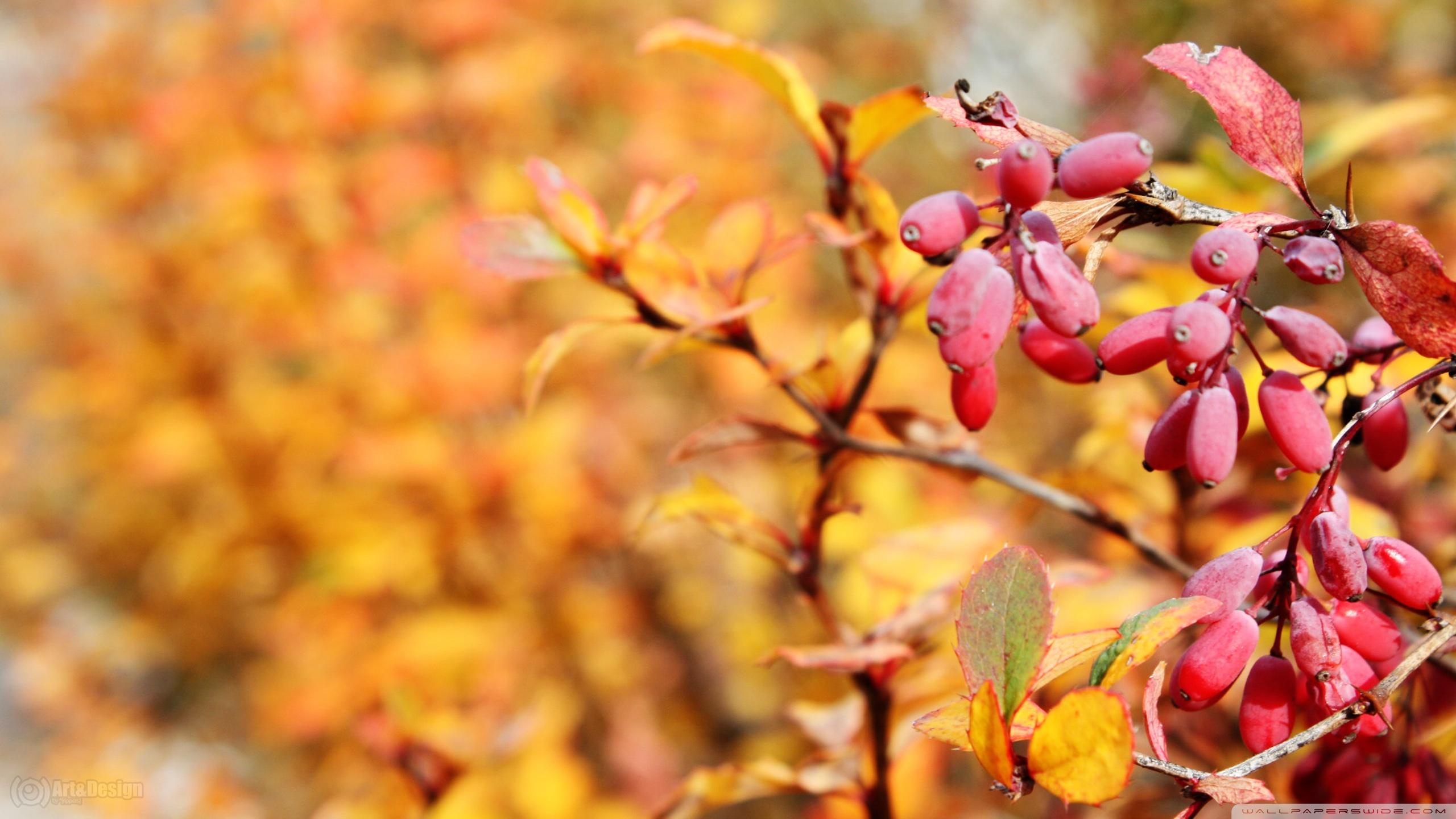 autumn_red_fruits-wallpaper-2560x1440.jpg