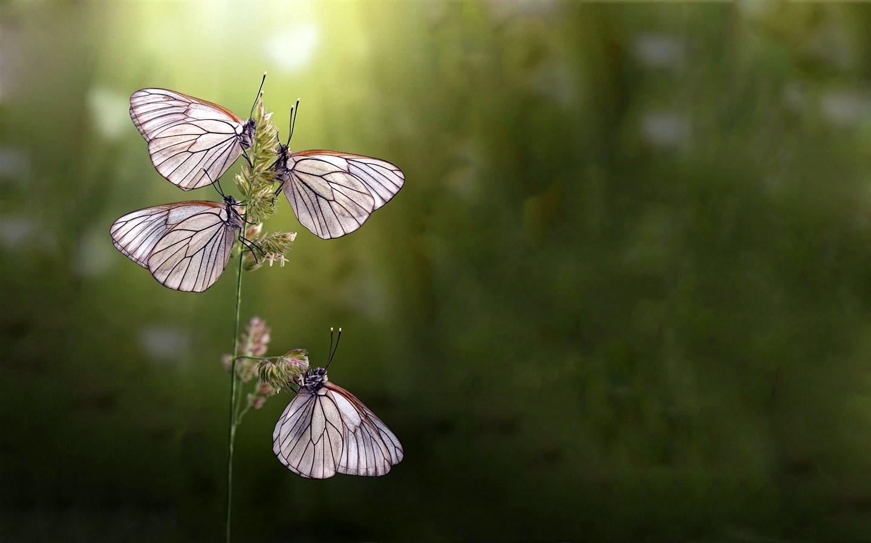 butterflies_by_takacica-d34sb4u.jpg