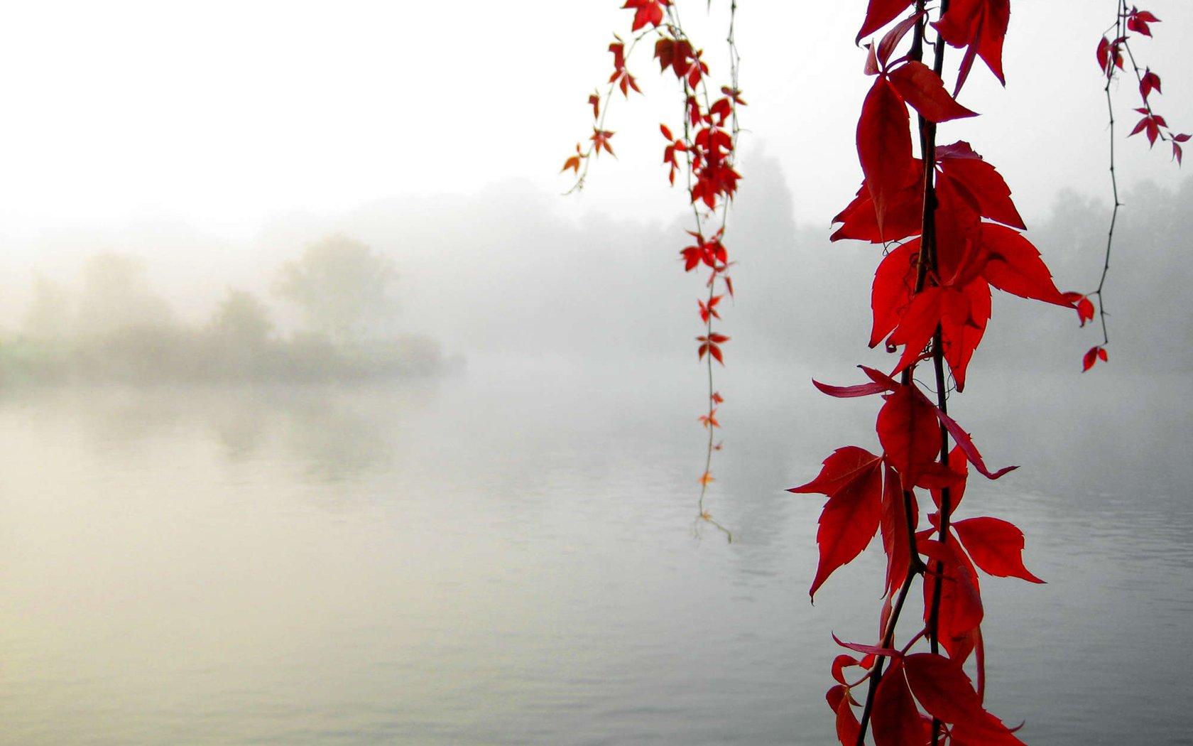 Serenity_Enchanted_by_sirpecangum.jpg