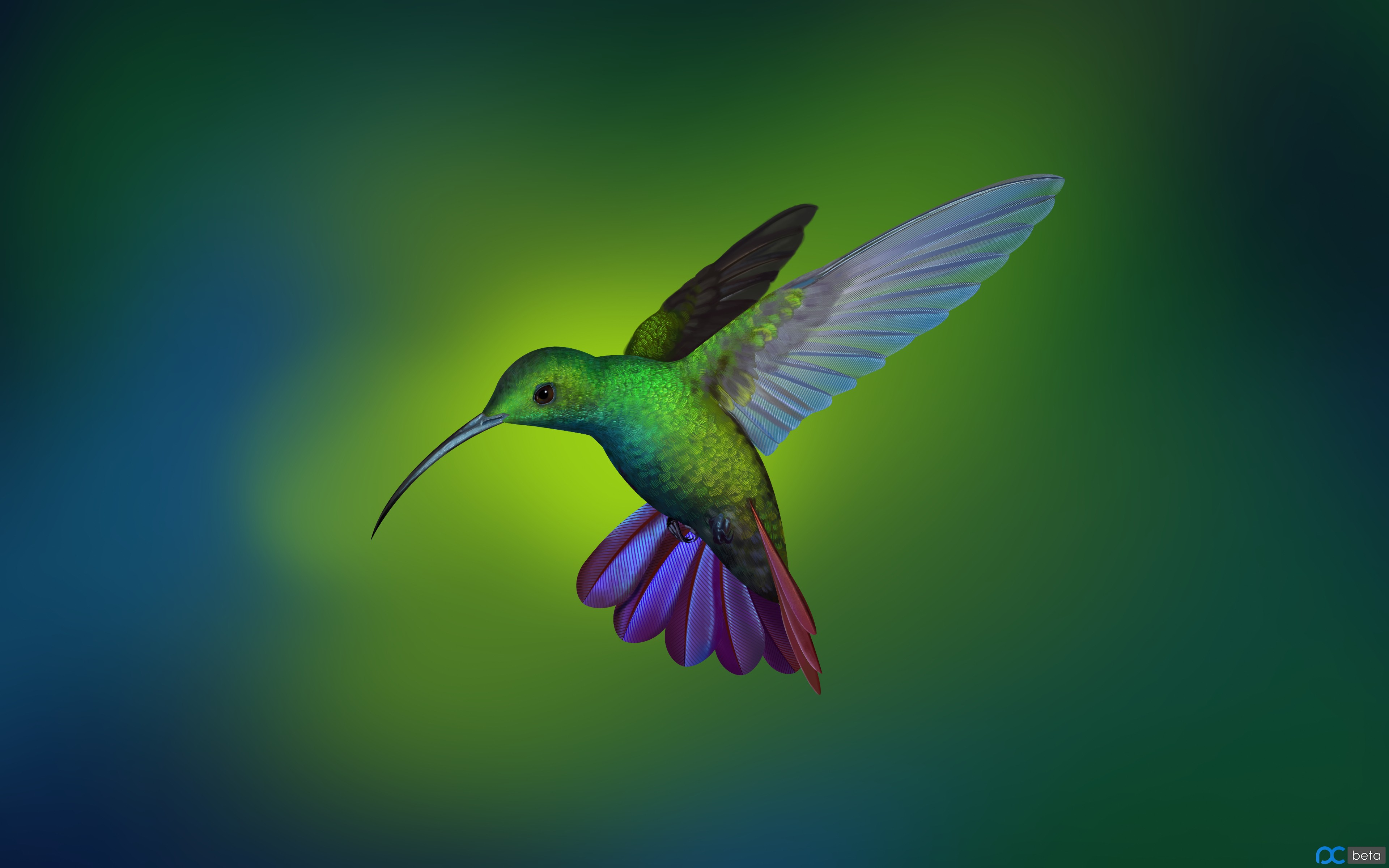 Hummingbird_by_Shu_Le.jpg