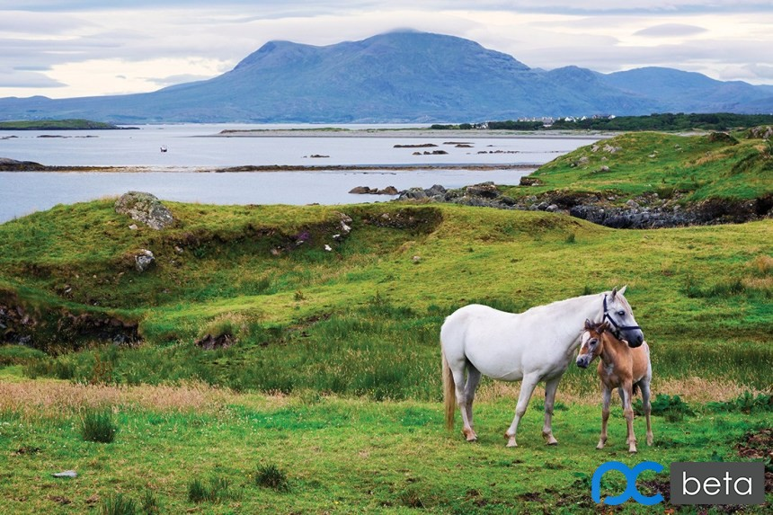 0_Ardnagreevagh-the-horses-of-Connemara.jpg